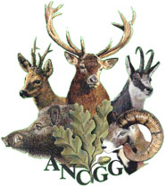 association nationale des chasseurs de grand gibier
